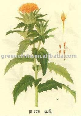 100% Plant Extract---Carthamus tinctorius,bio-technology