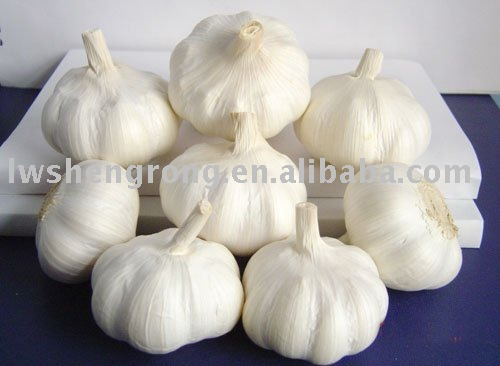 garlic,chinese garlic,fresh garlic