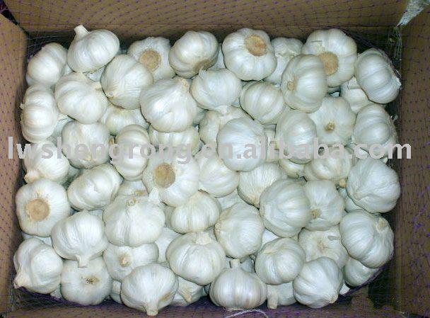 garlic,pure white garlic