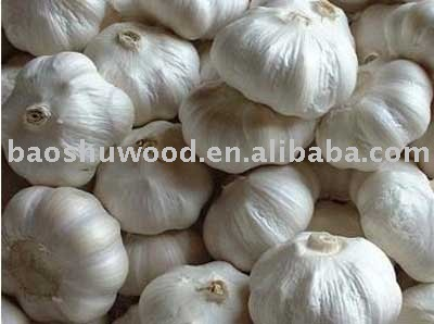 great white garlic