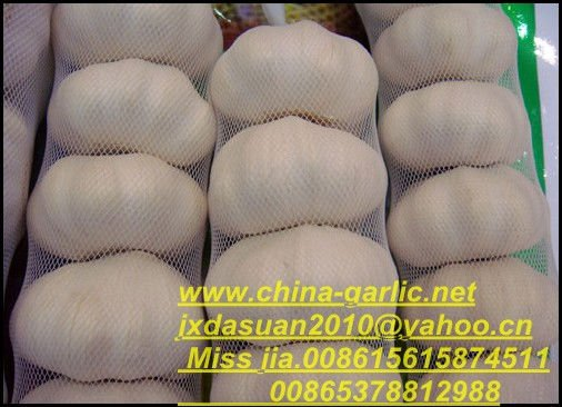 whole  white garlic supplier