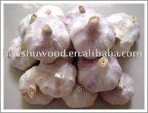 Chinese the freshest   white garlic