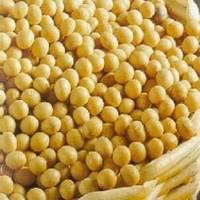 Soybeans NON GMO.