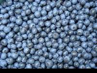 Blueberry Concentrate(SALES6 At Lgberry Dot Com Dot Cn)