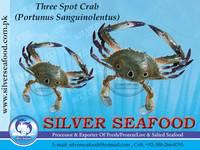 Three Spot Crab(Portunus Sanguinolentus)