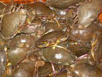 Crab s ( Live ) /  Crab  Meat