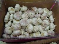 Normal  White   Garlics / Pure   White   Garlics ,  2011  New  Crop