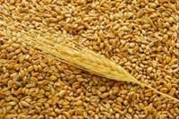 Wheat From Russia, Ukraine, Kazakhstan