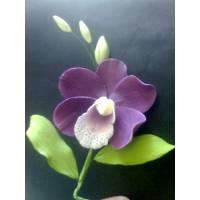 Orchids Dark Purple