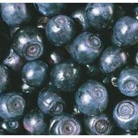 Organic Blueberry IQF, Puree, Juice Concentrate