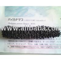 Dried Sea Cucumber 100% Made In Japan