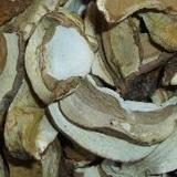 Organic Mushroom Boletus Edulis