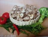 Flower with Stem Mushroom (SZ