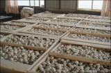 HACCP Garlic of  Wooden   Case