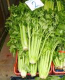 Celery Extract