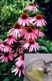 Echinacea Purpurea Herb P. E.