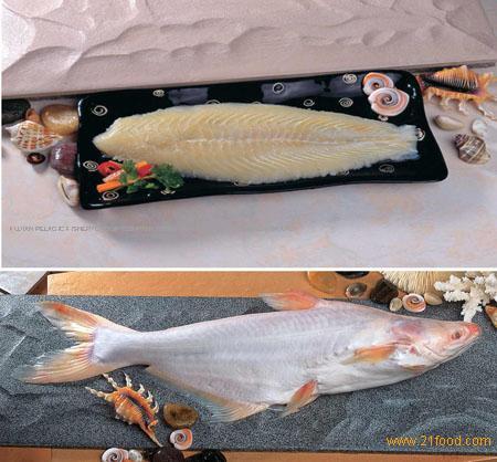 Basa fish products china basa fish supplier for What kind of fish is basa