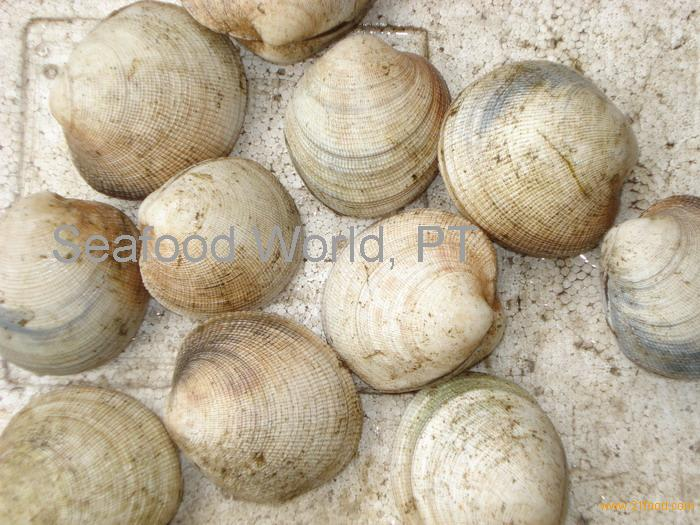 how to clean frozen bamboo clams