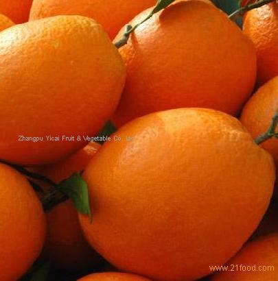 Honey navel orange
