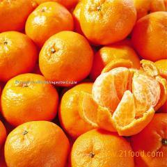 Honey mandarin