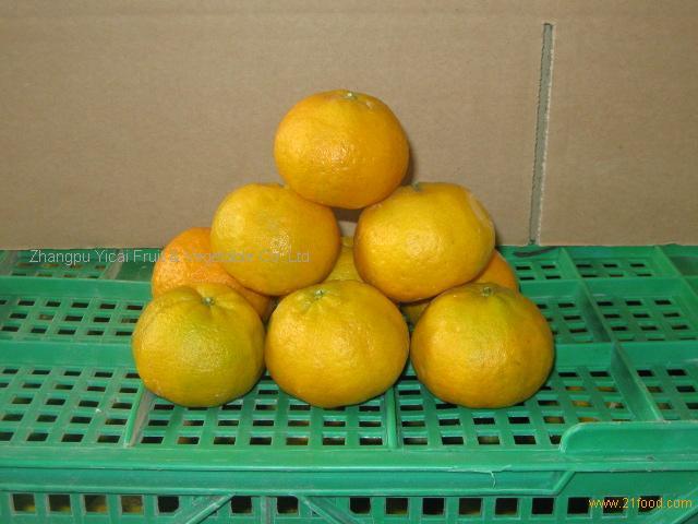 Chinese mandarin orange