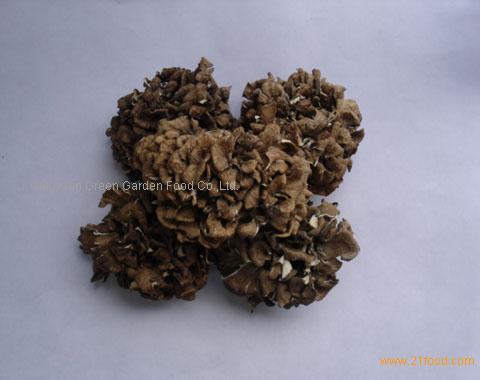 Grifola Frondosa (maitake)