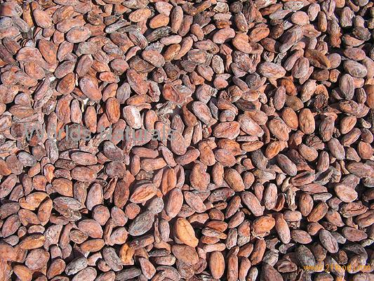 WE HAVE COCOA BEANS, ARABICA AND ROBUSTA GREEN COFFEE ...