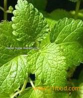 Lemon Balm Extract ,Melissa officinalis ,Rosmarinic Acid