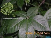 Eleutheroside