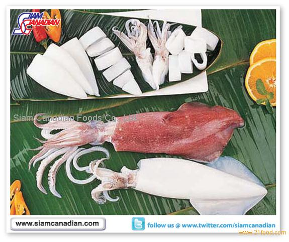 Frozen Squid (Loligo spp.)