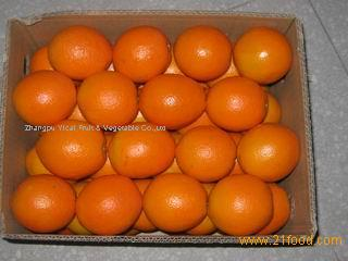 Tasty and Fresh Navel orange