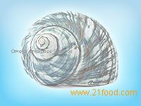 Shell (Top Shell,Star Shell,Fan Shell,Ear Shell,Fan Shell,Ear Shell)