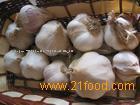 top shangdong garlic