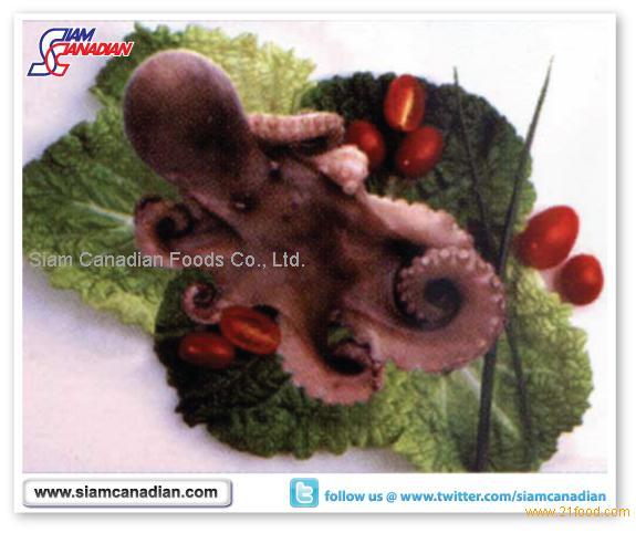 Giant Octopus (Octopus Vulgaris)