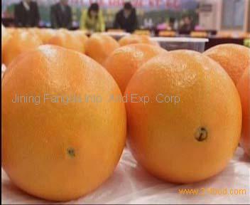 navel orange on promotion