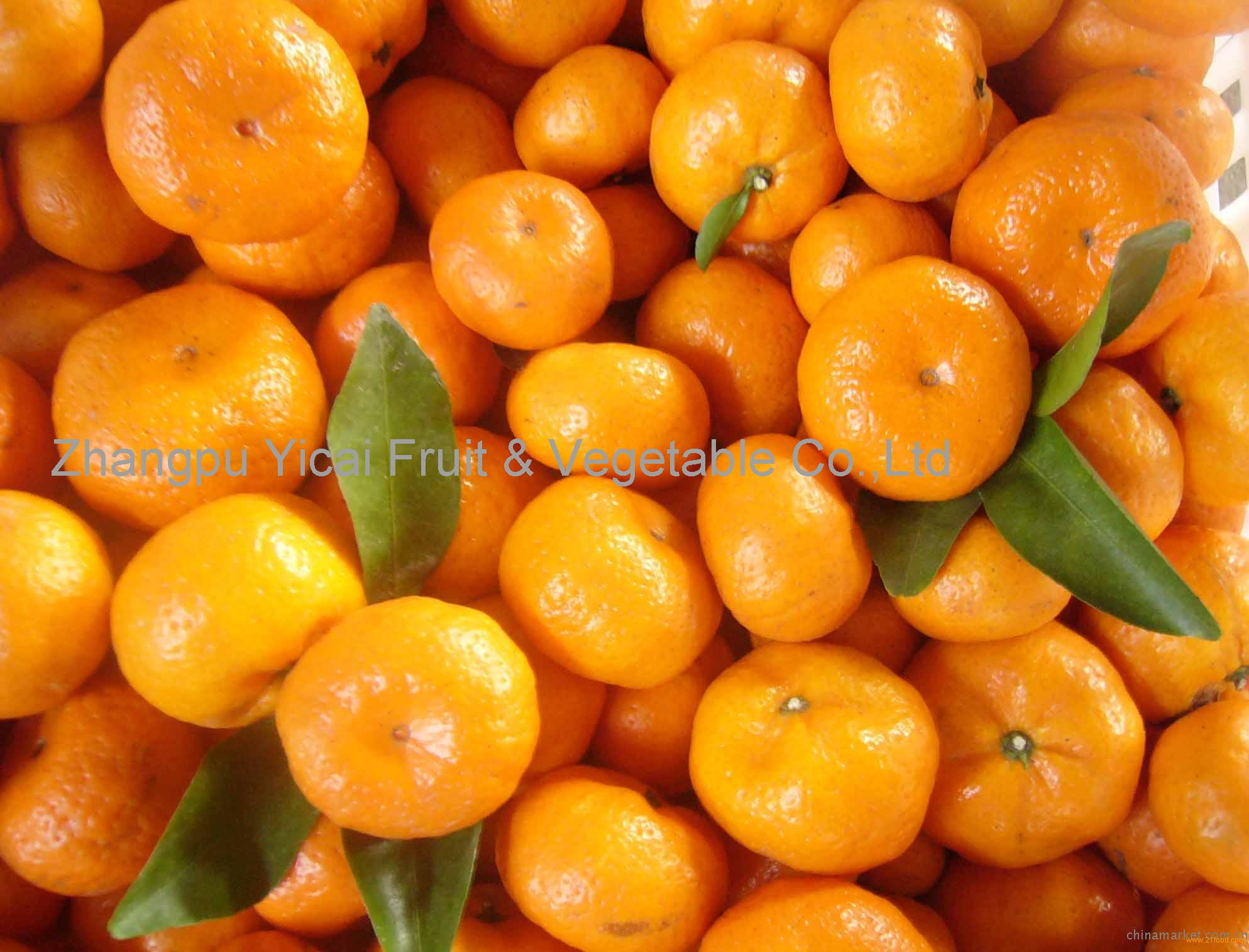 Nanfeng orange1
