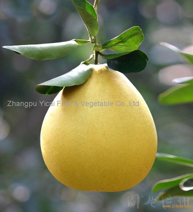 Honey pomelo20