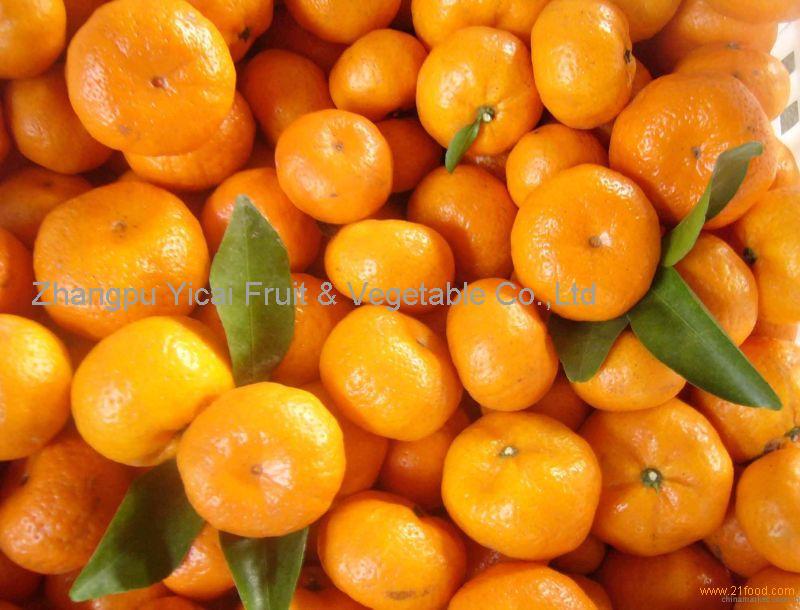 Nanfeng orange8