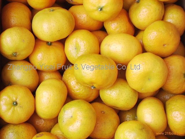 Nanfeng orange15