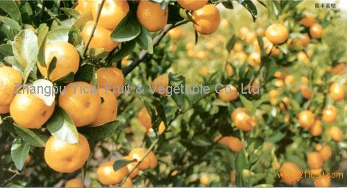 Nanfeng orange22