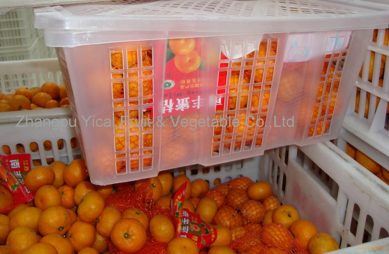 Nanfeng orange25
