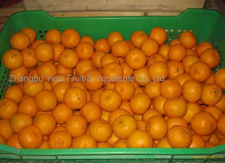 Nanfeng orange36