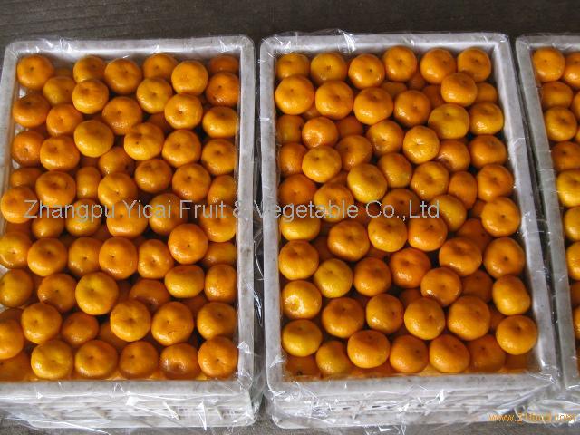 Nanfeng orange41