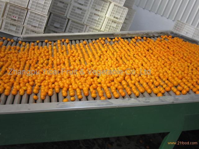 Nanfeng orange42