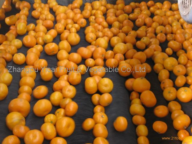 Nanfeng orange44