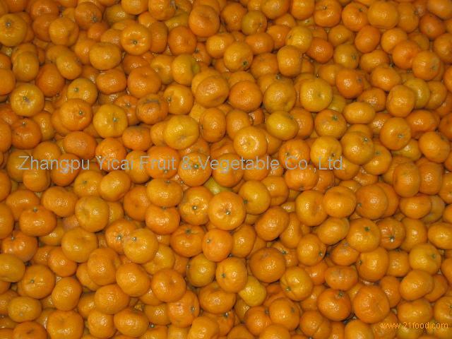 Nanfeng orange50