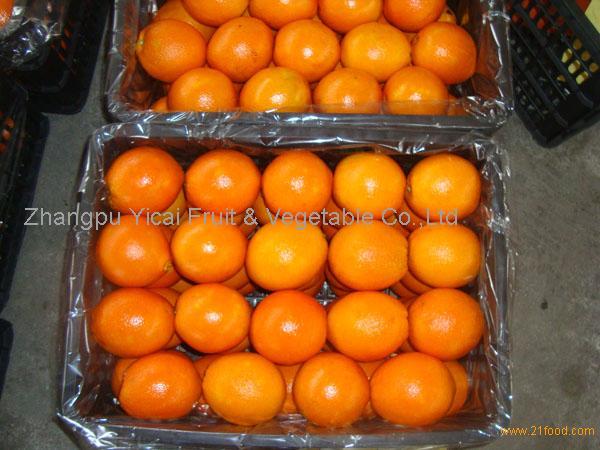 Navel orange01