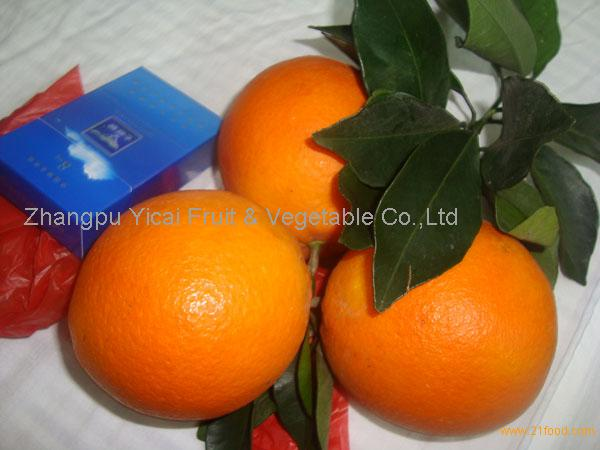 Navel orange02
