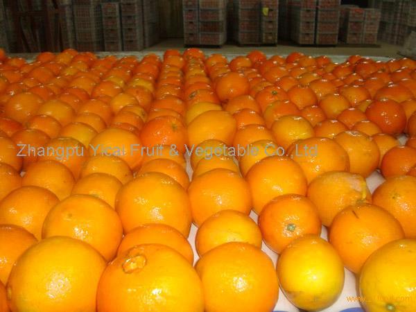 Navel orange09