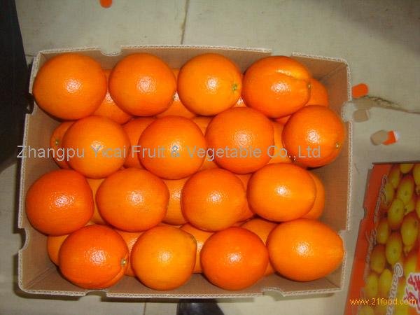 Navel orange12